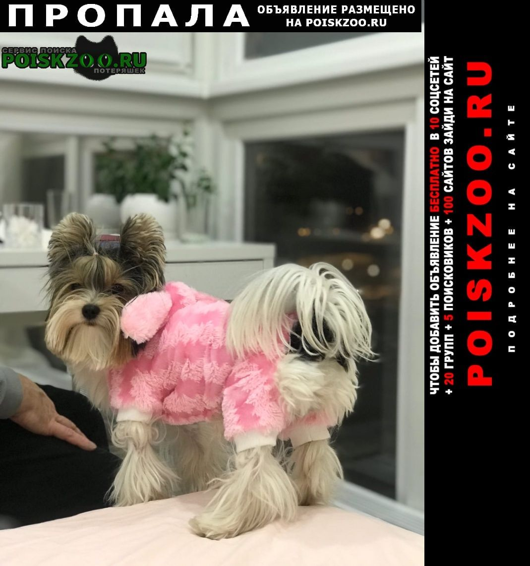 Пропала собака нашедшему гарантируем вознаграждение Красногорск