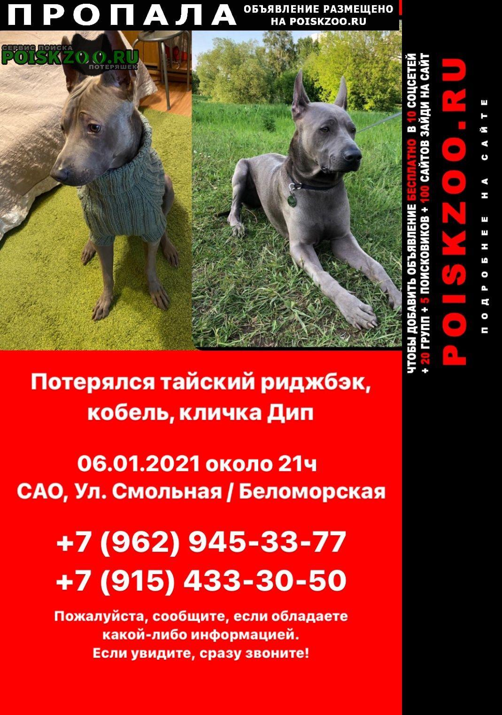 Пропала собака тайский риджбэк Москва