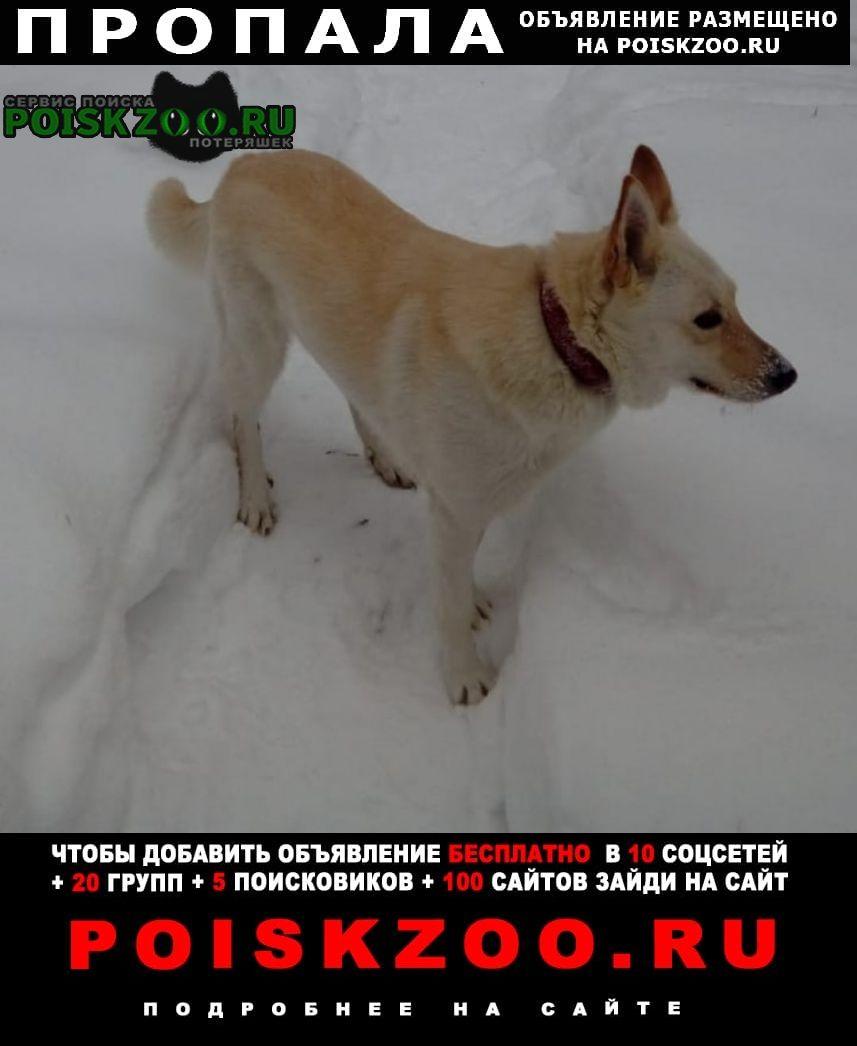Пропала собака белла Балашиха