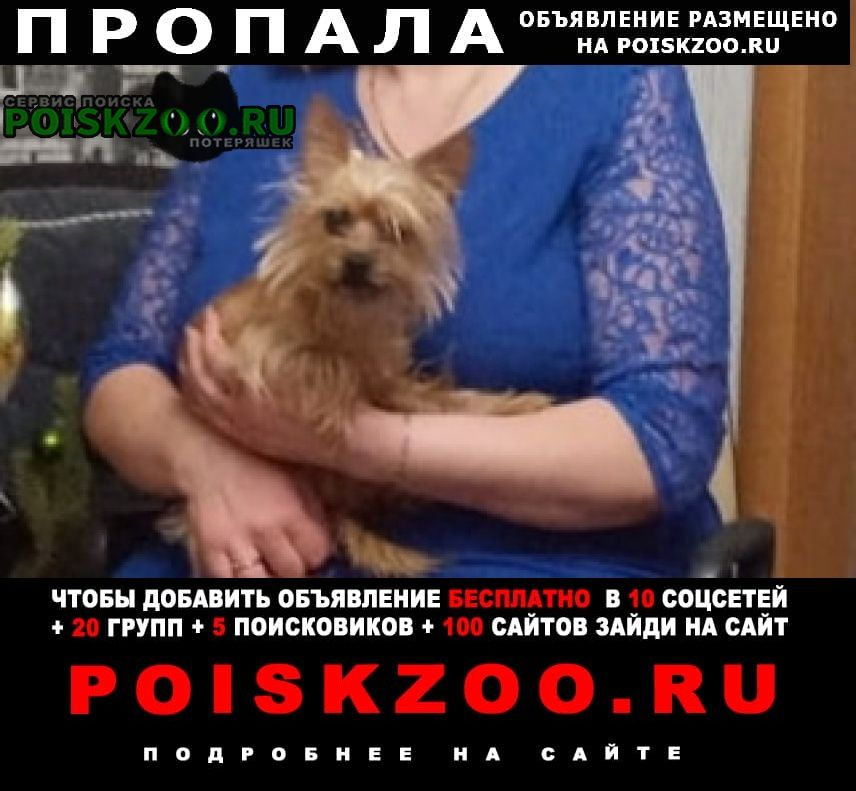 Оренбург Пропала собака собачка йоркширский терьер
