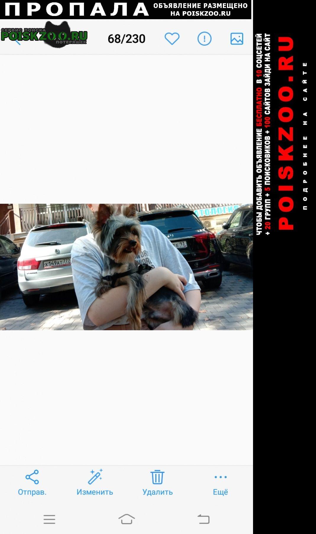 Пропала собака потерялась в районе ксм Сочи