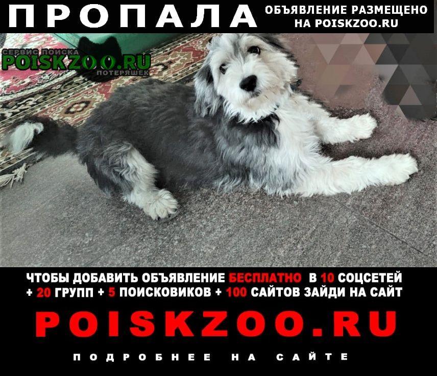 Ростов-на-Дону Пропала собака ищу собаку. небольшой лохматый чёрно-бел