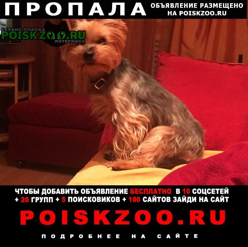 Горячий Ключ Пропала собака в посёлке приреченский