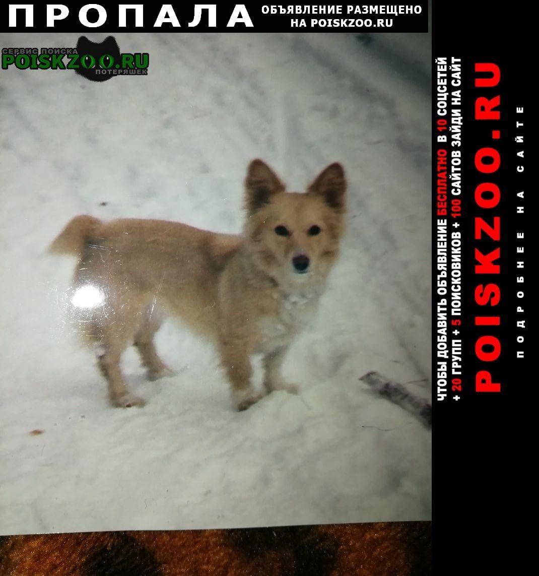 Пропала собака Ульяновск