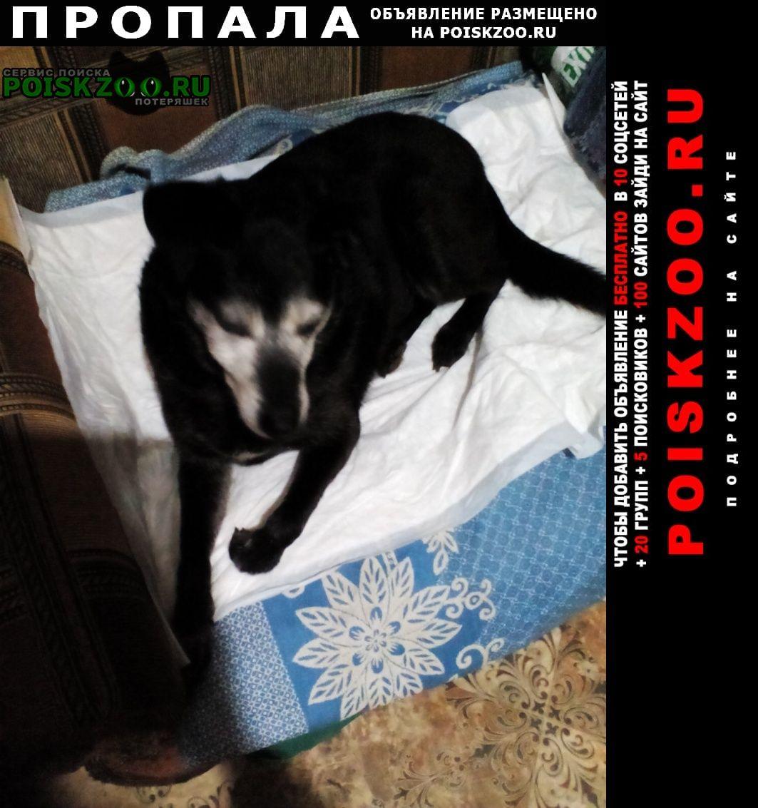 Пропала собака Иваново