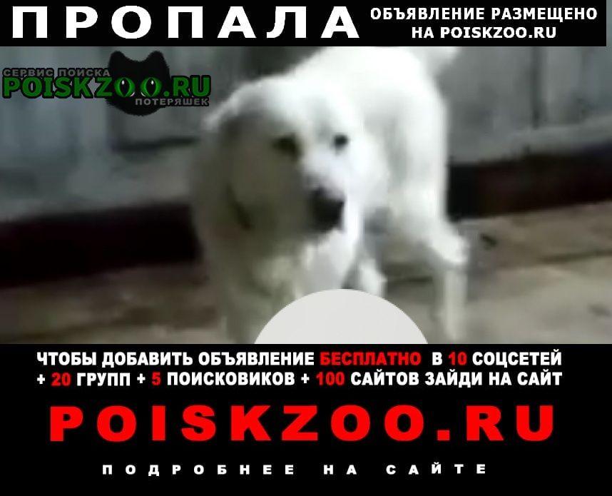 Волгоград Пропала собака сао(алабай).белый 6 лет