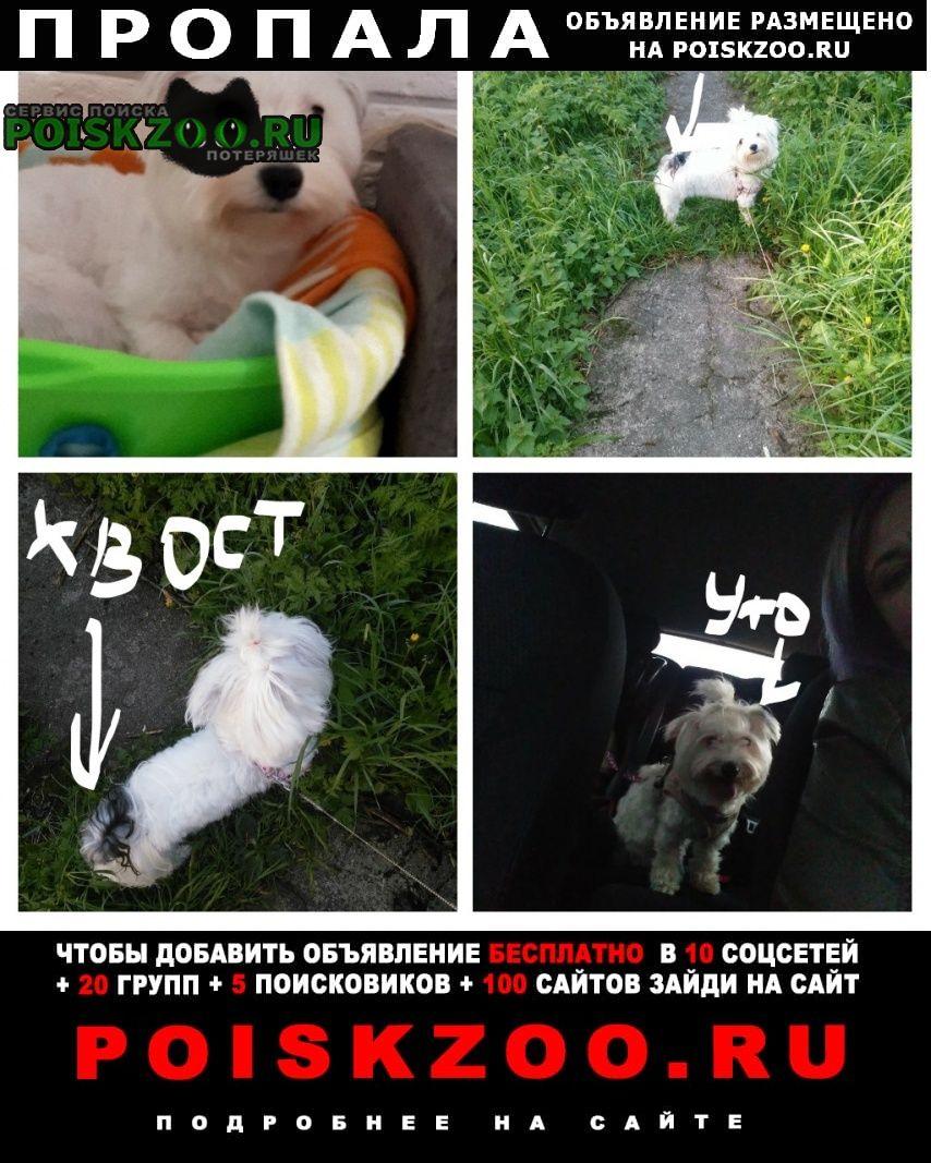 Хотьково Пропала собака поиски продолжаются