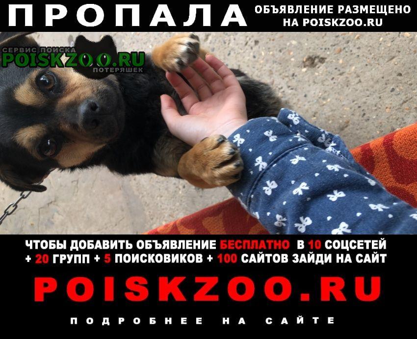 Пропала собака Буденновск