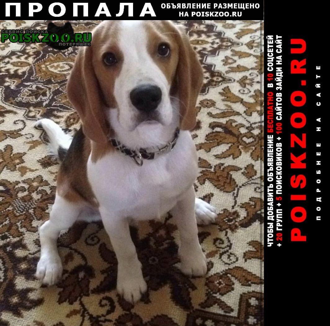 Пропала собака  Городище (Волгоградская обл.)