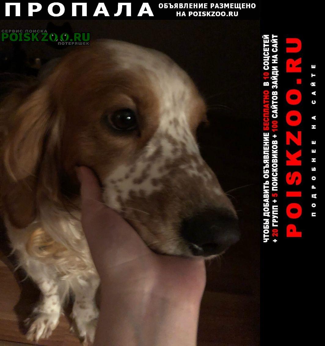 Пропала собака Сургут