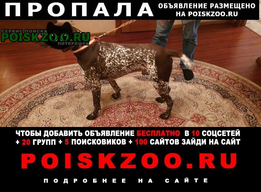 Нарофоминск Пропала собака