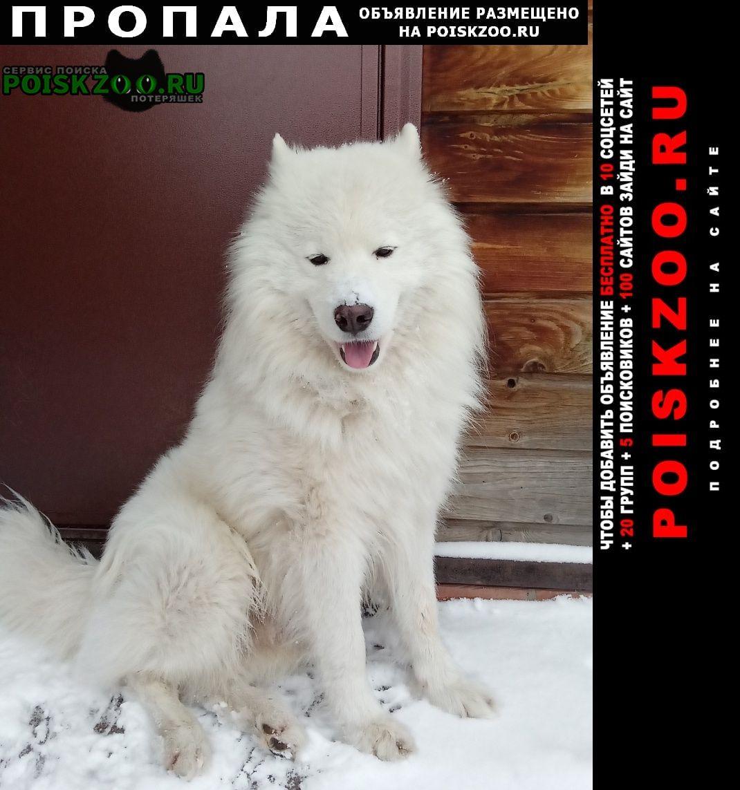 Пропала собака Ногинск