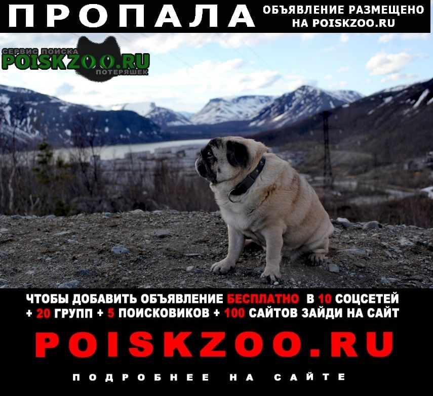 Пропала собака  Кировск Мурманская обл.