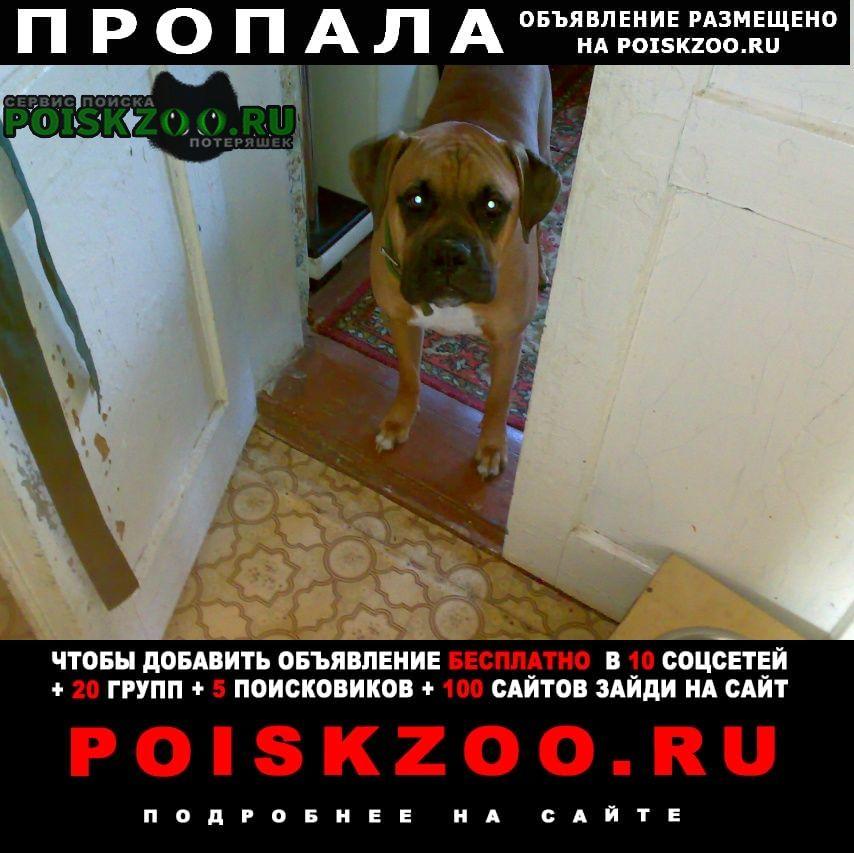 Пропала собака немецкий боксёр Ахтырский
