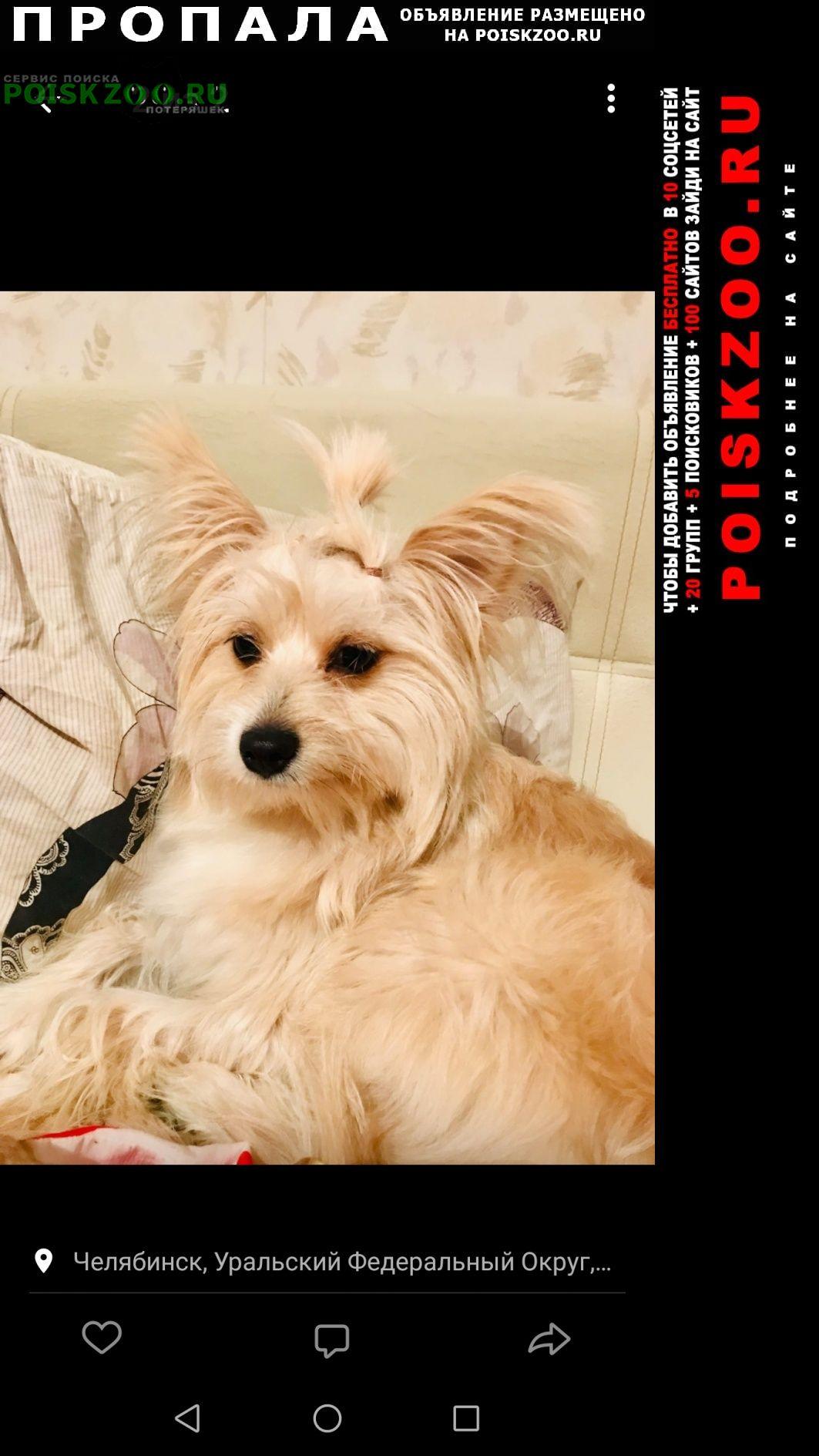 Пропала собака зову омела Челябинск