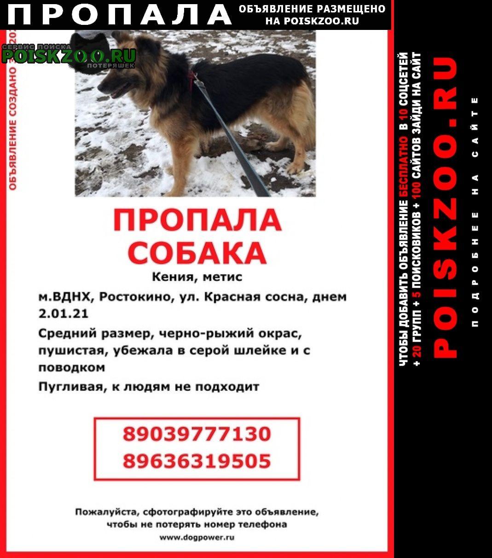 Пропала собака север, северо-восток Москва