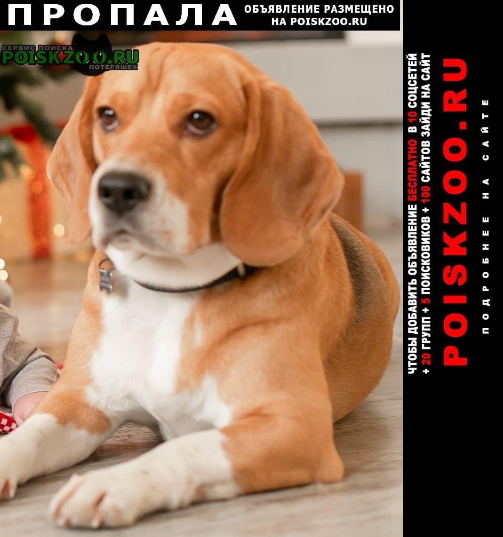 Пропала собака порода бигль, кличка марли Москва