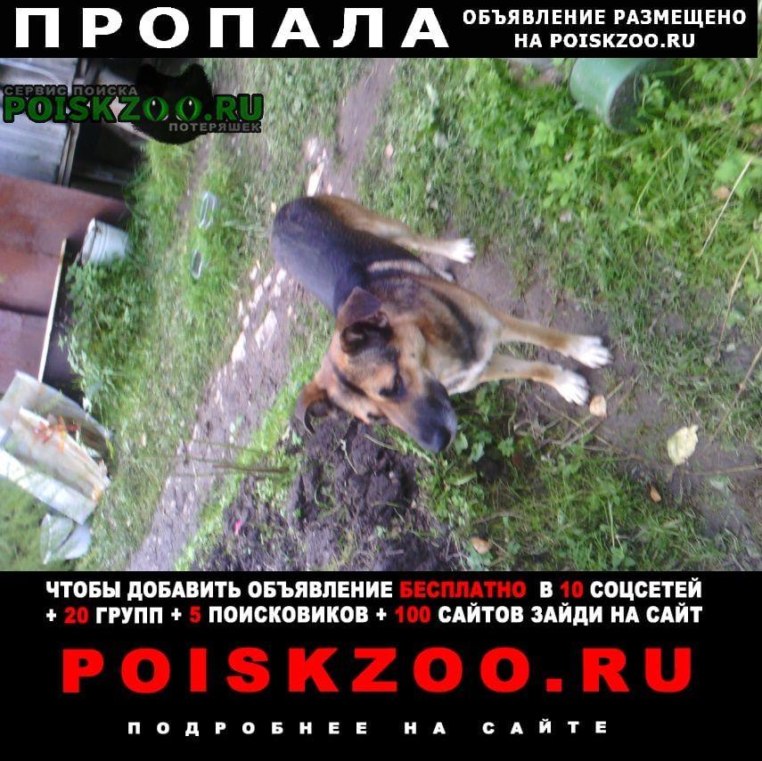 Пропала собака пес в москве Москва