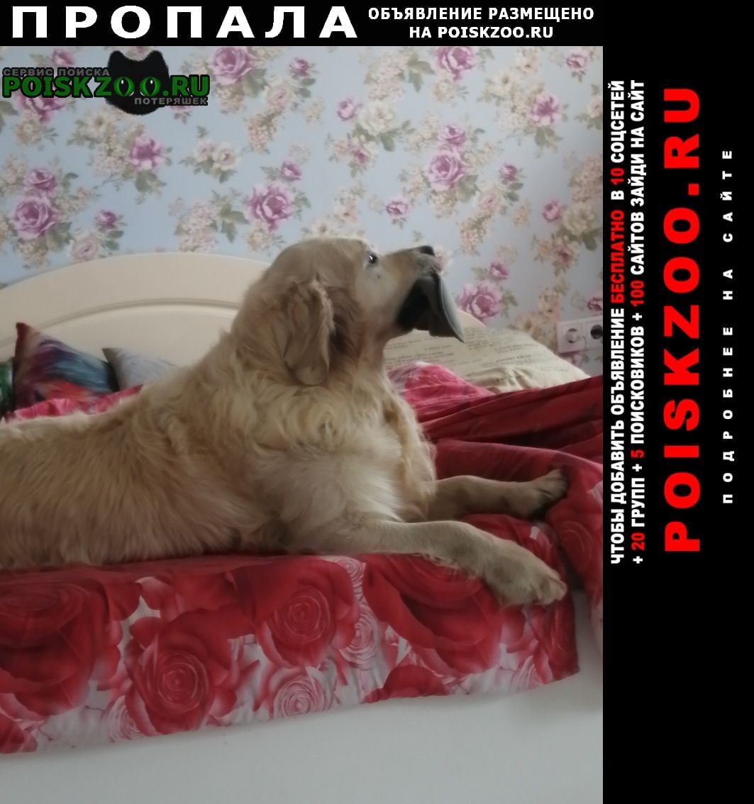 Барнаул Пропала собака