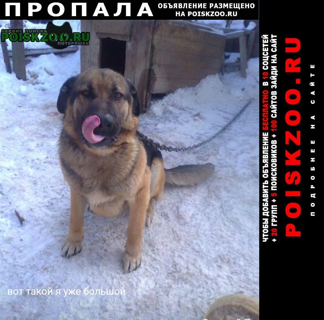 Пропала собака кавказец Оренбург