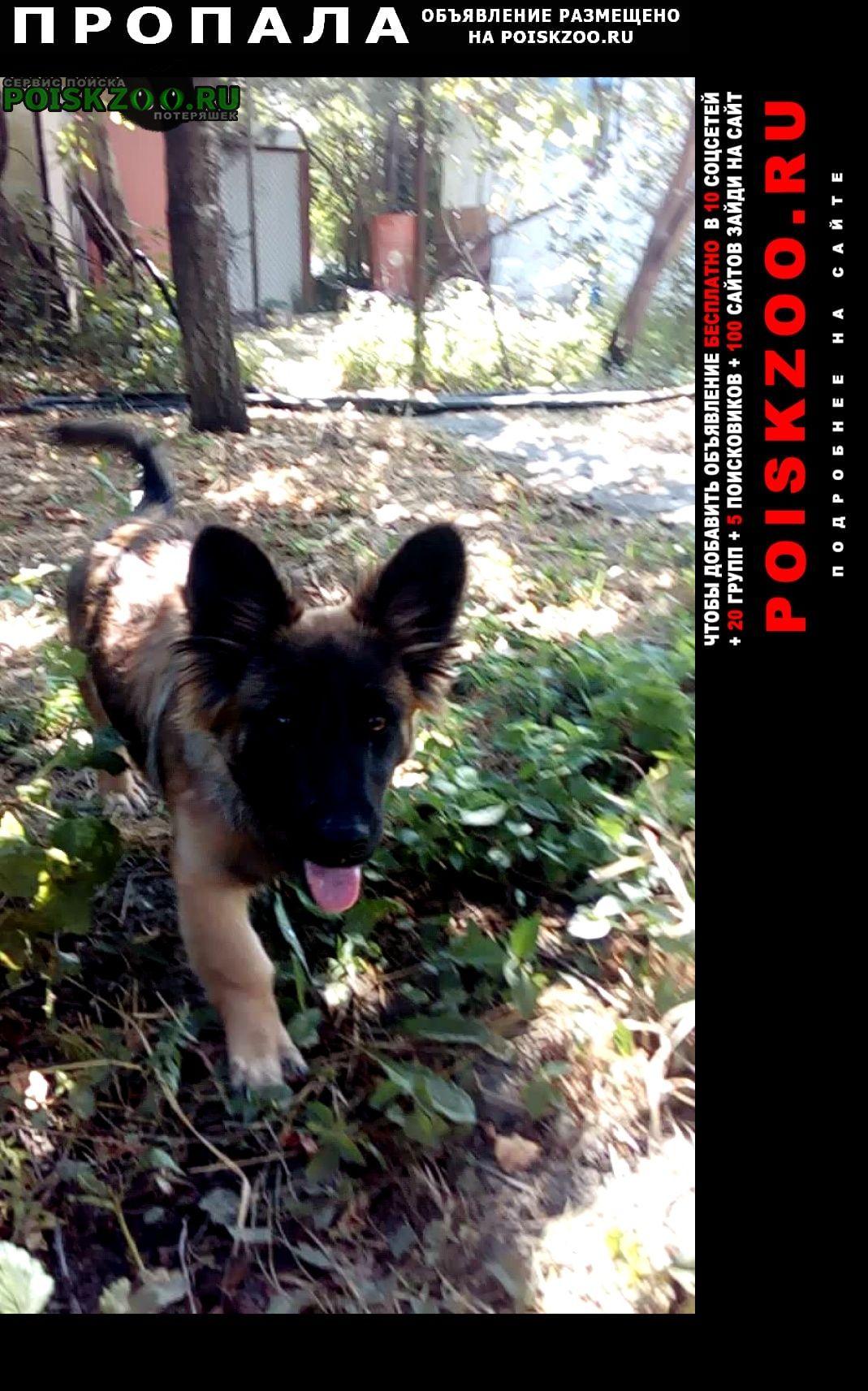 Пропала собака помогите, пожалуйста, найти  Новороссийск