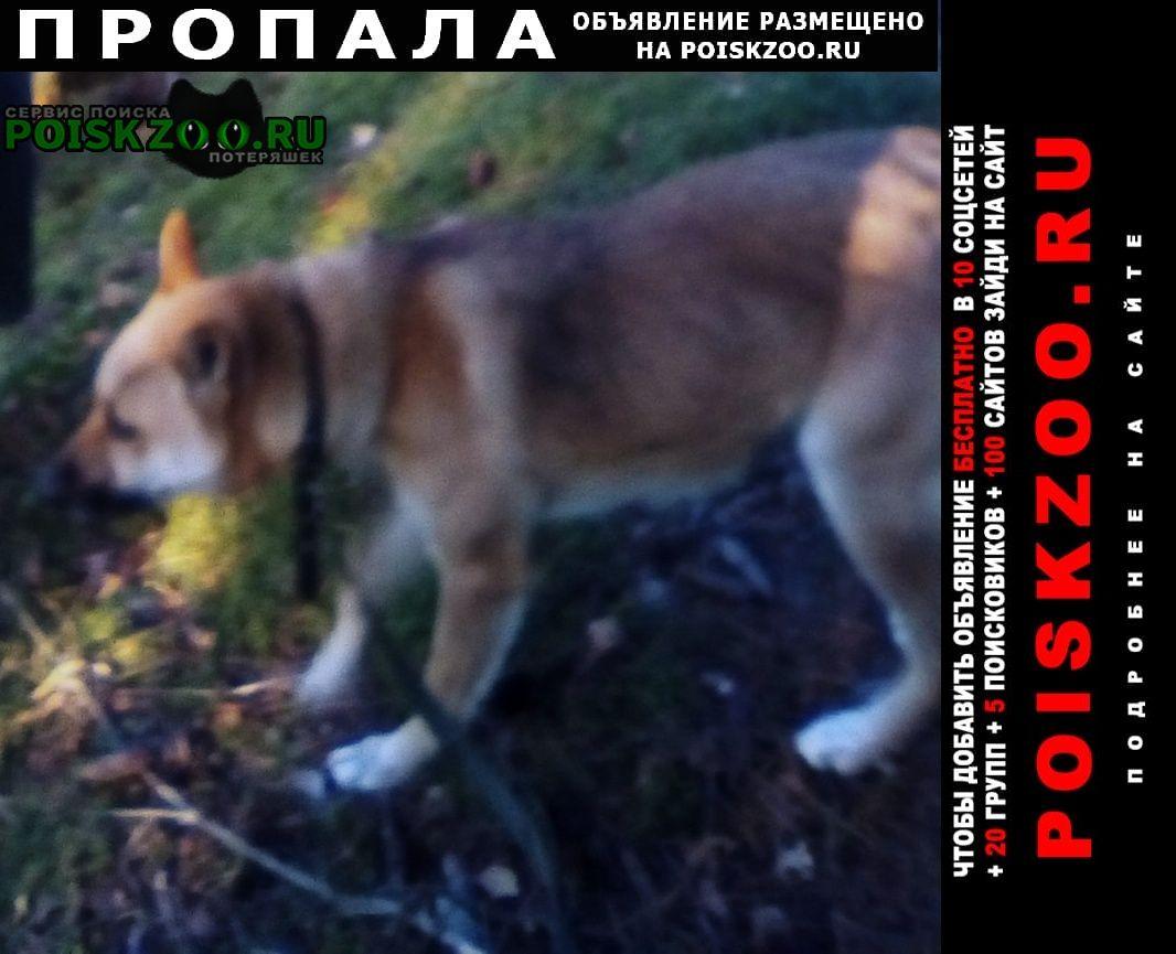 Верещагино Пропала собака попал молодой кобель.