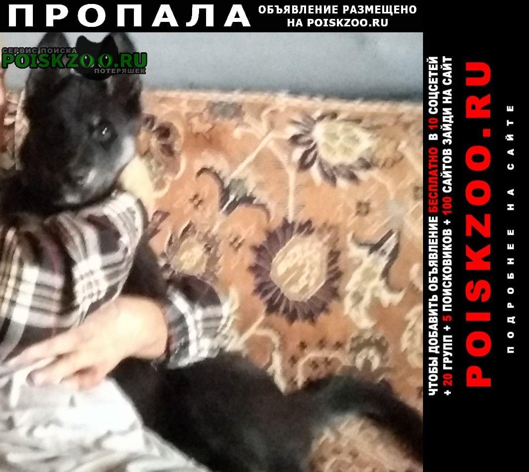 Пропала собака.. Солнечногорск