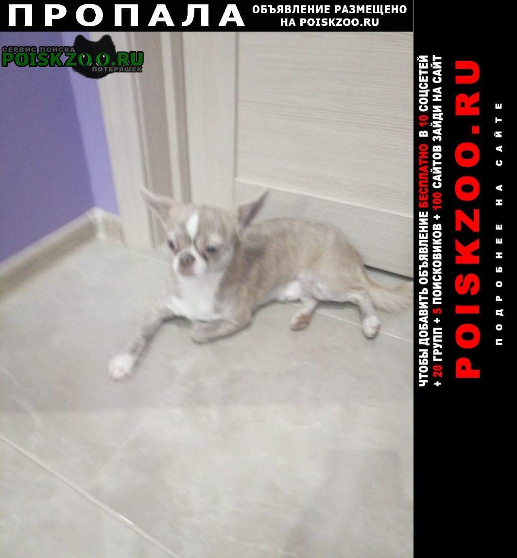 Пропала собака Чалтырь