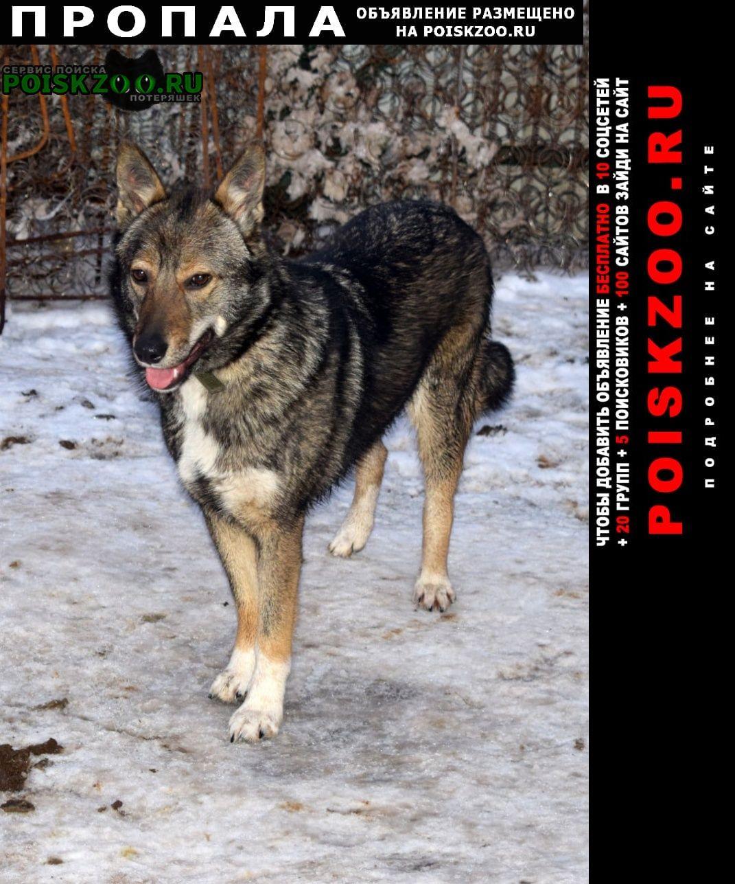 Пропала собака потерялась, похожа на волка Казань