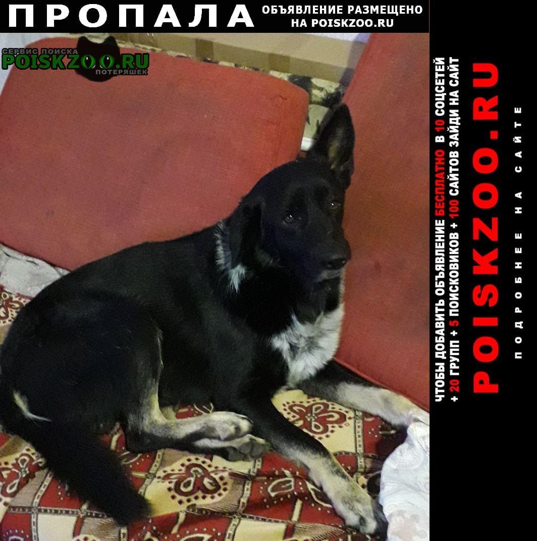 Пропала собака Новочеркасск