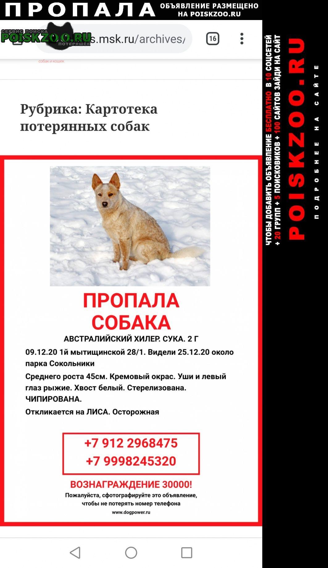 Пропала собака помогите найти собаку Москва