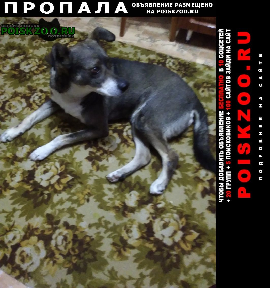 Пропала собака Россошь