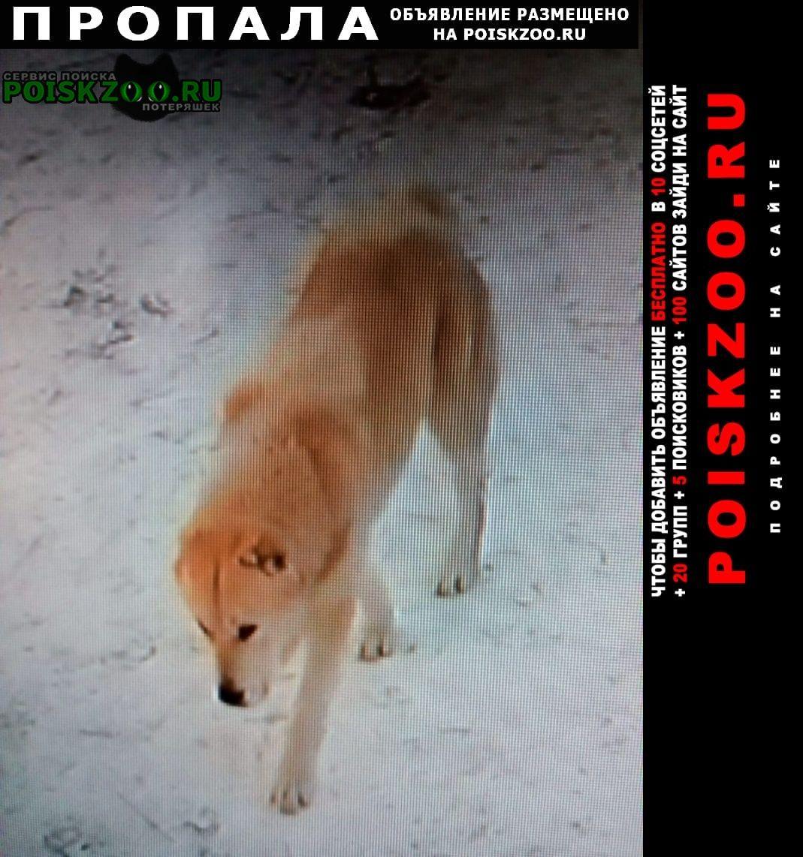 Пропала собака подросший щенок алабая (самка) Копейск