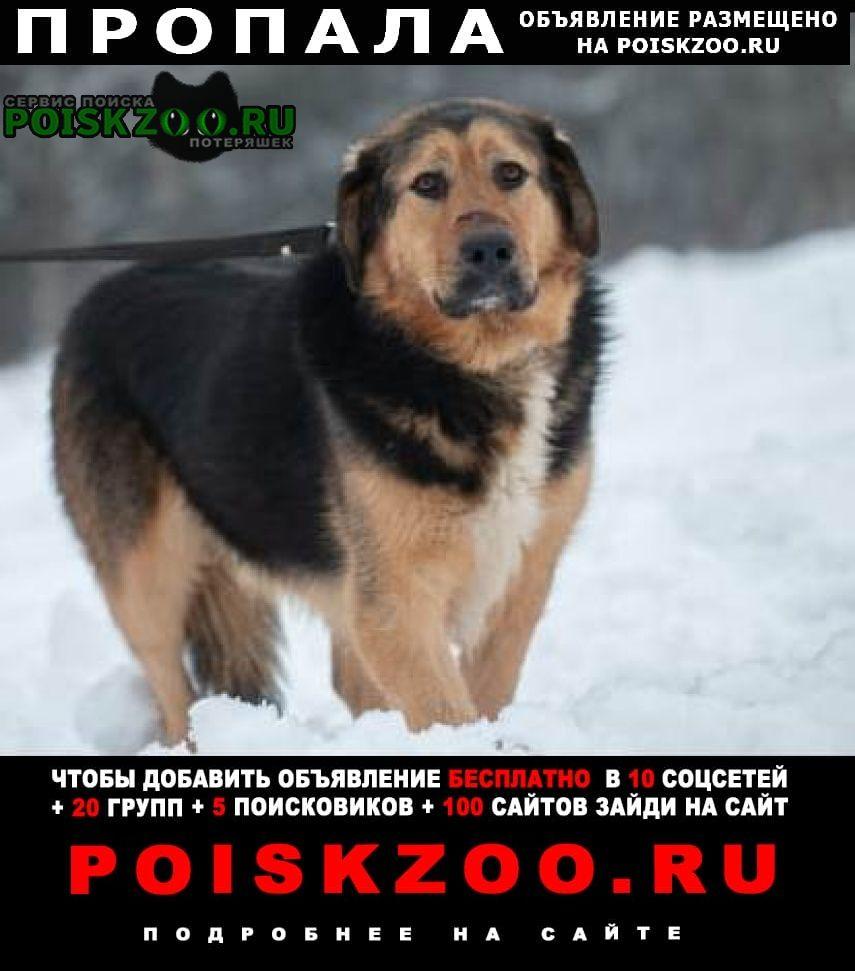 Пропала собака в районе д.дудкино-мосрентген Москва