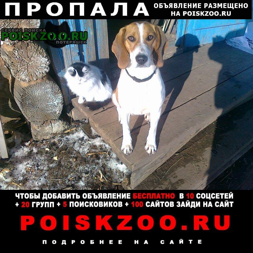Альметьевск Пропала собака