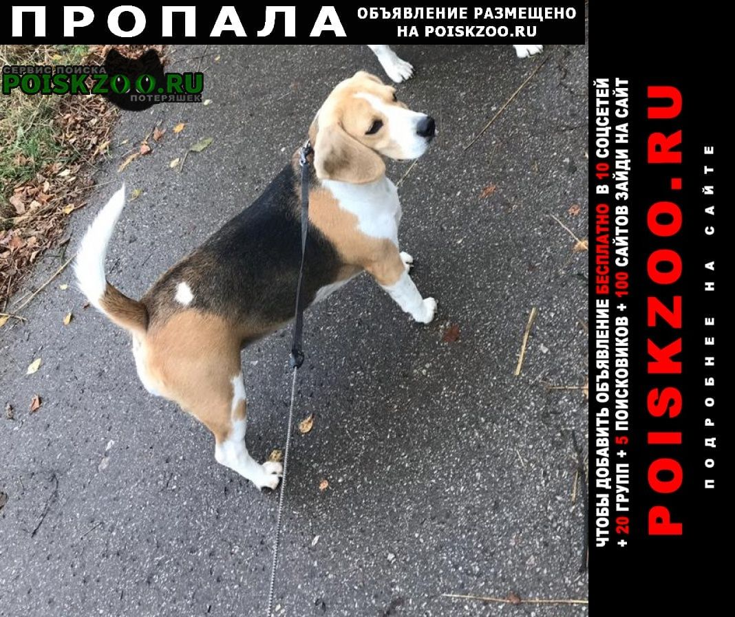 Новомосковск Пропала собака вечером 13 января потерялась