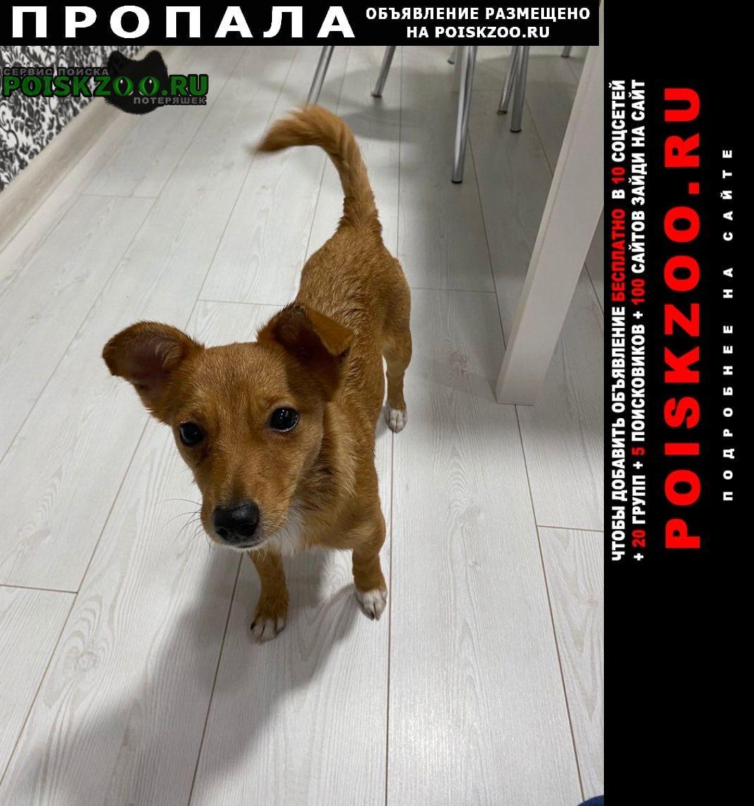Гомель Пропала собака на фото собачка не наша, похожая