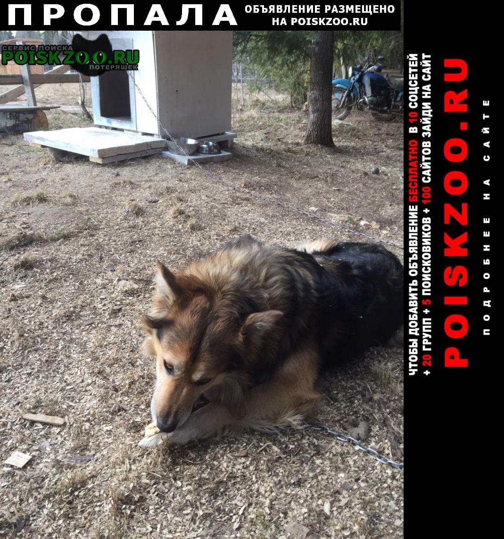 Пропала собака Хотьково
