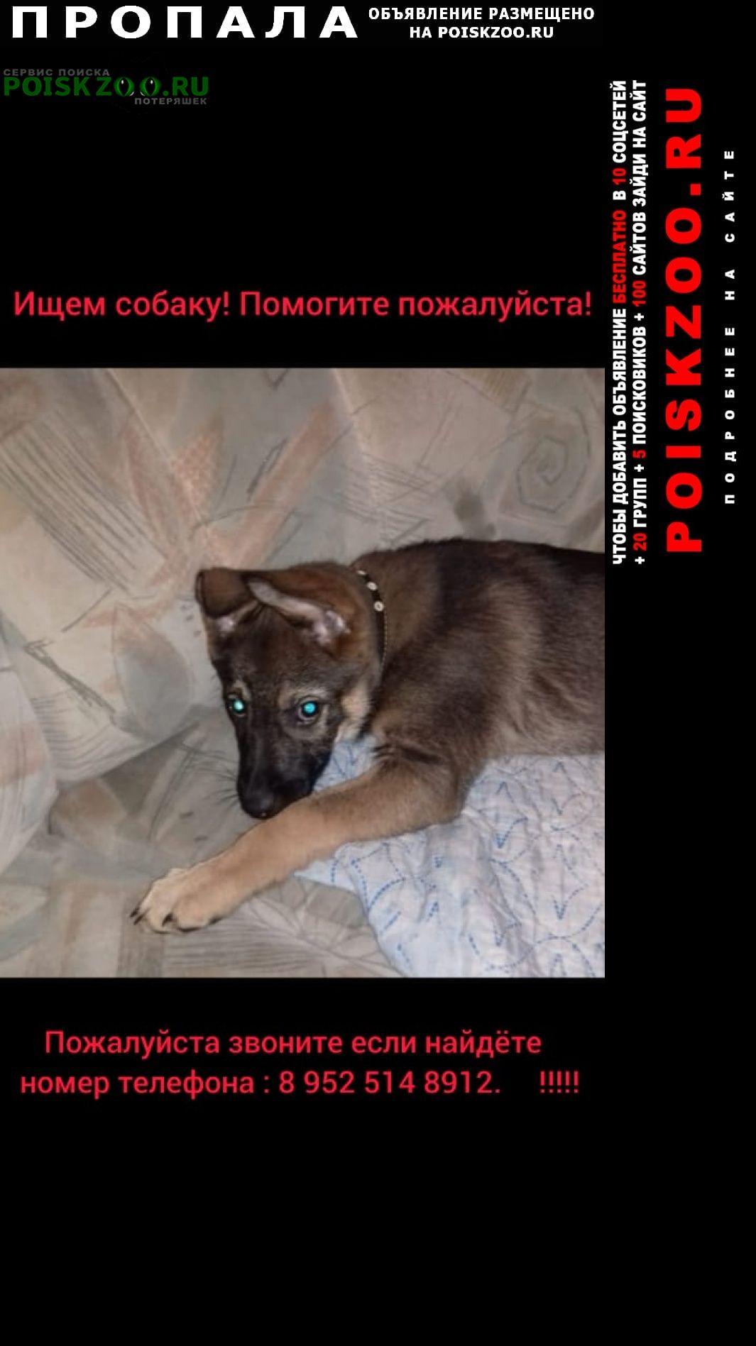 Челябинск Пропала собака щенок-девочка
