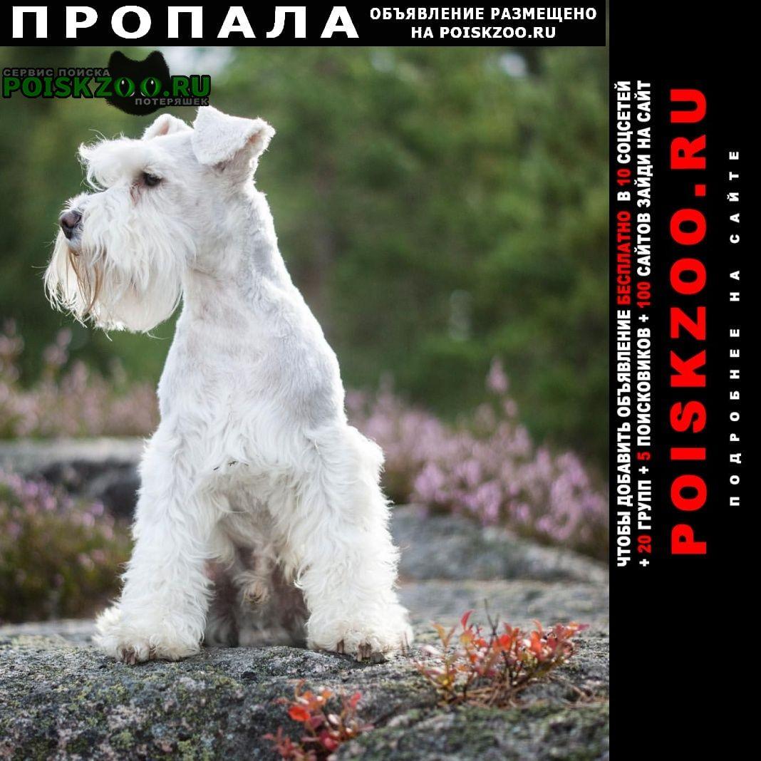 Пропала собака Усолье-Сибирское (Иркутская обл.)
