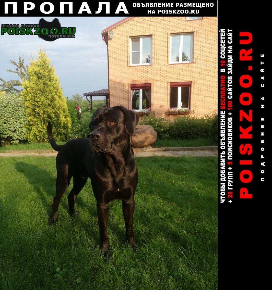 Пропала собака кане корсо Чехов