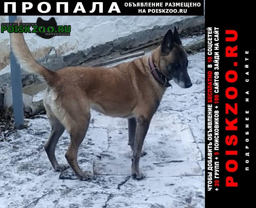 Пропала собака бельгийская овчарка Матвеев Курган