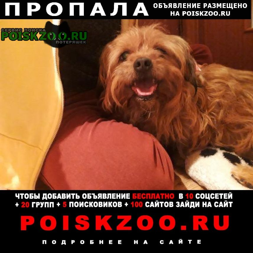 Пропала собака Батайск