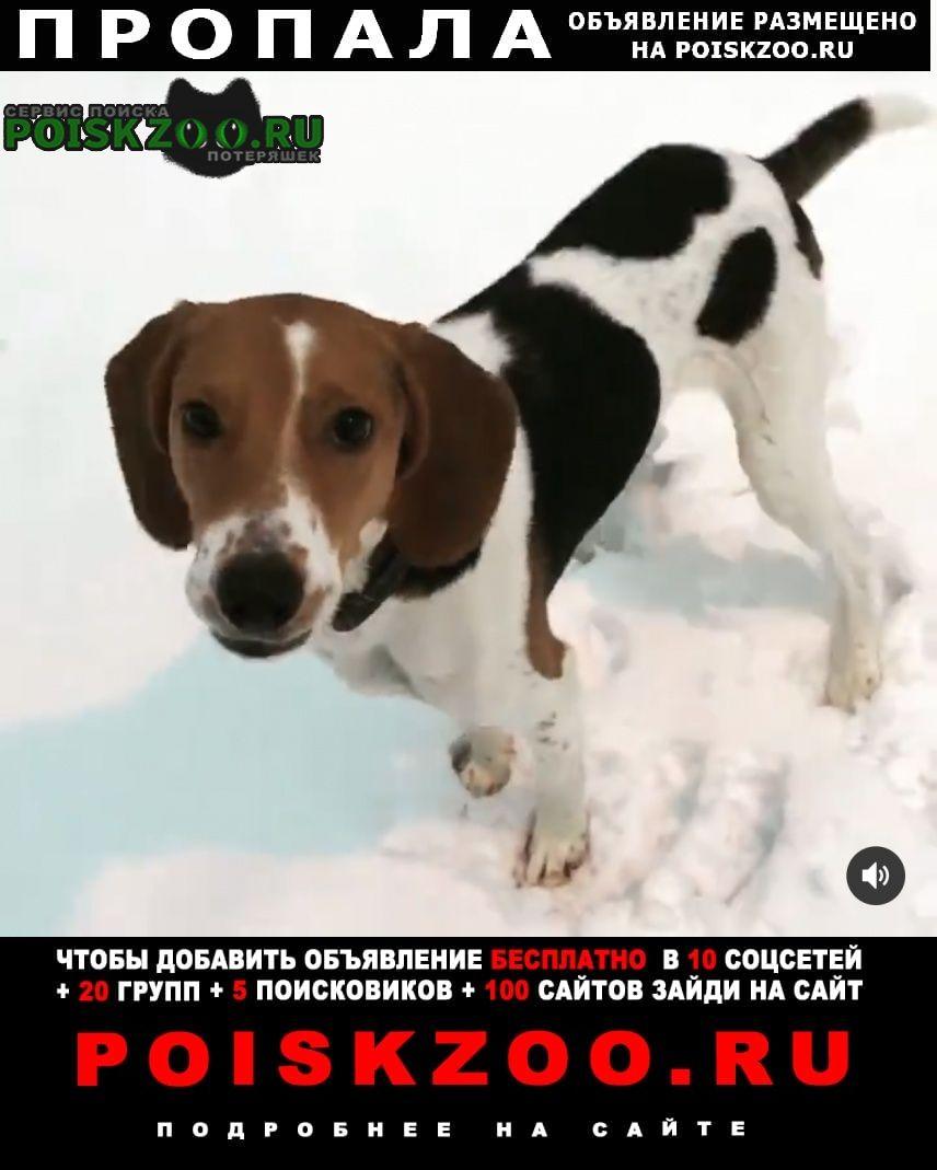 Пропала собака эстонская гончая Москва