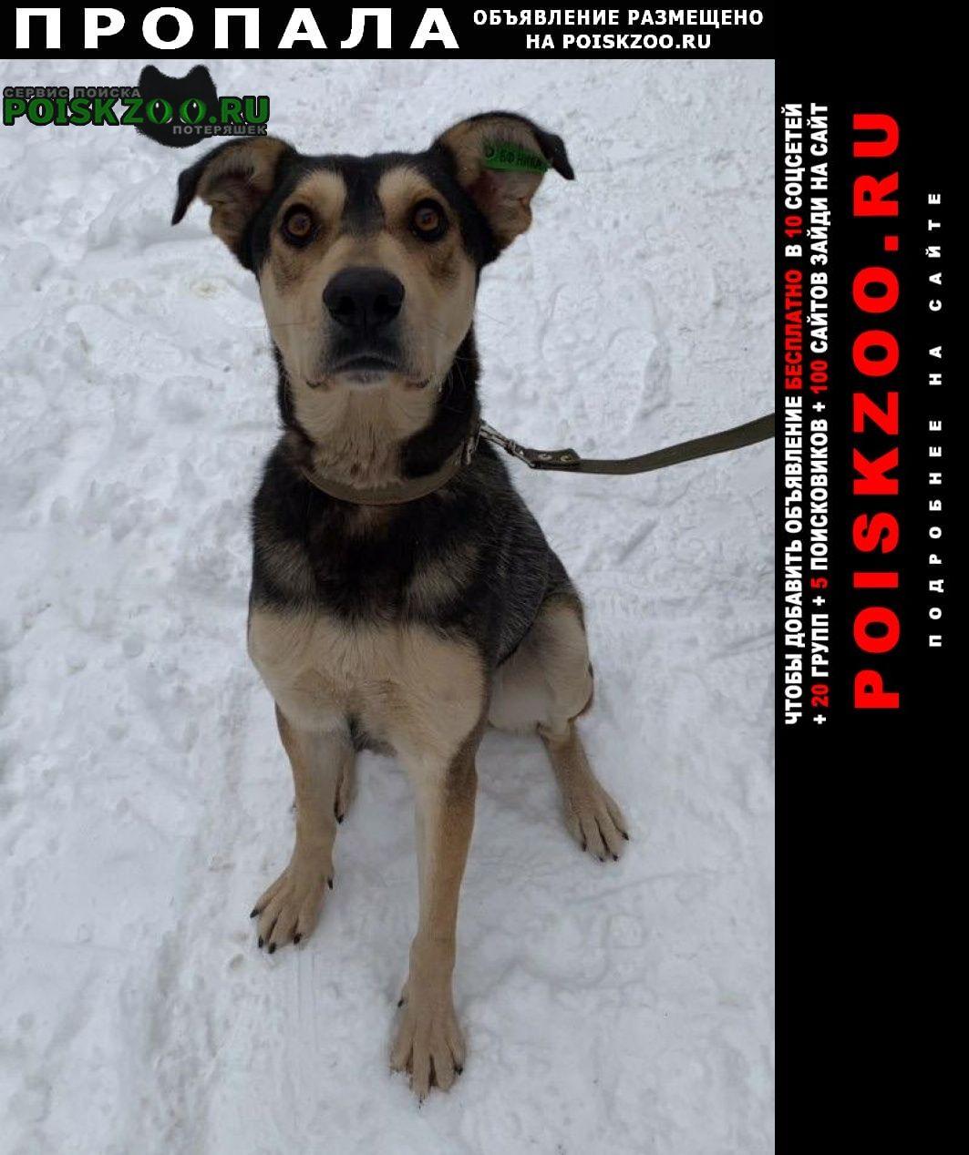 Пропала собака помогите найти пса Красногорск