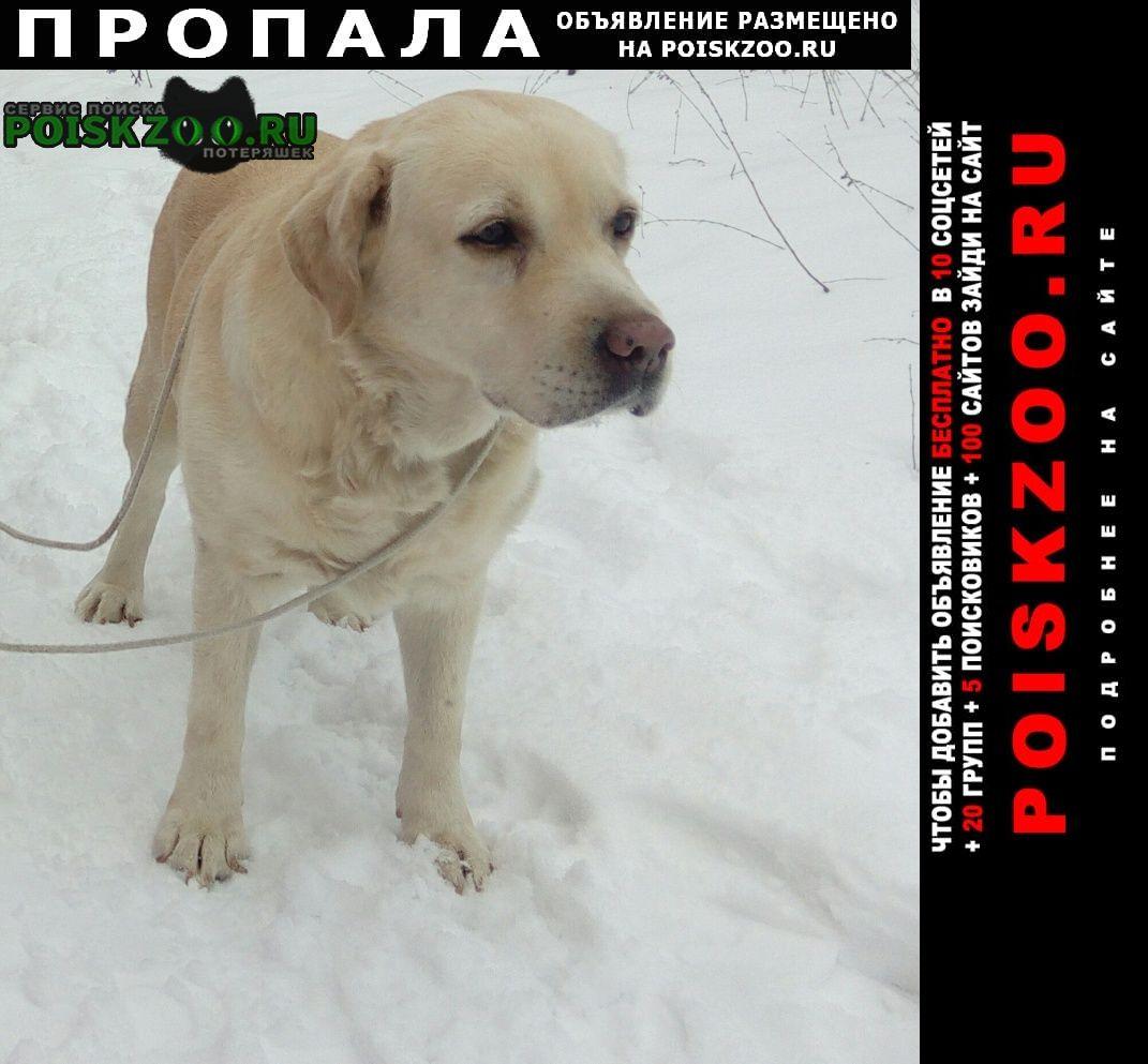 Пропала собака лабрадор палевый Ростов-на-Дону