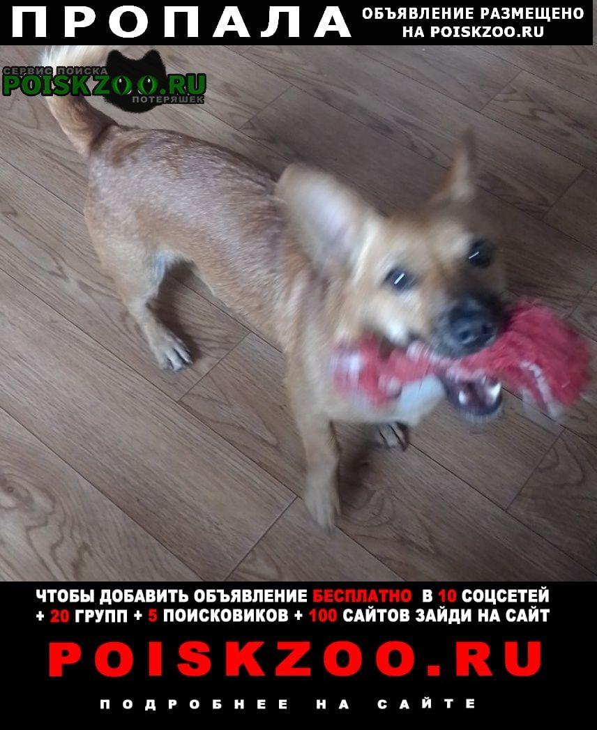 Пропала собака Гомель