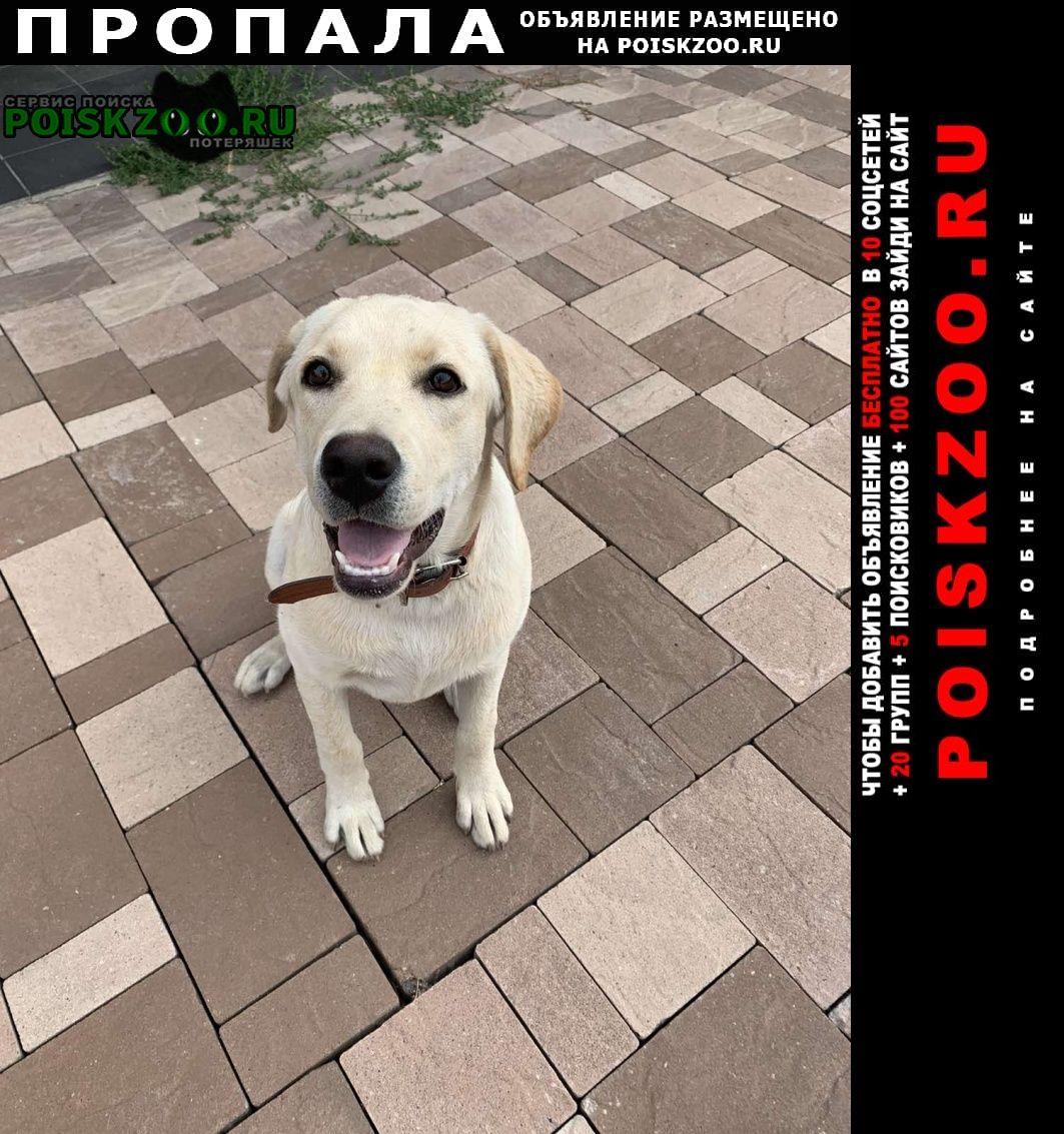 Пропала собака Белгород