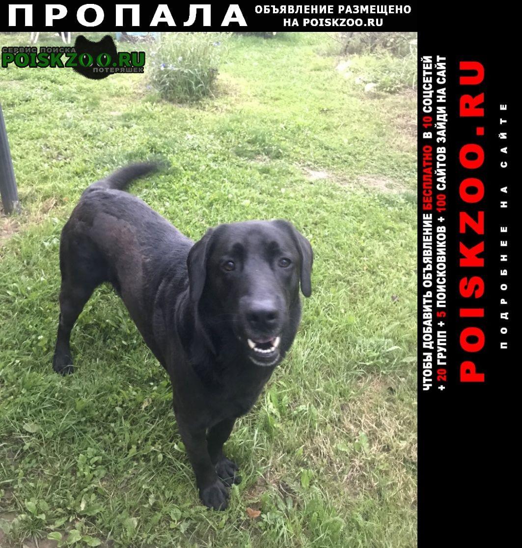 Пропала собака Обнинск