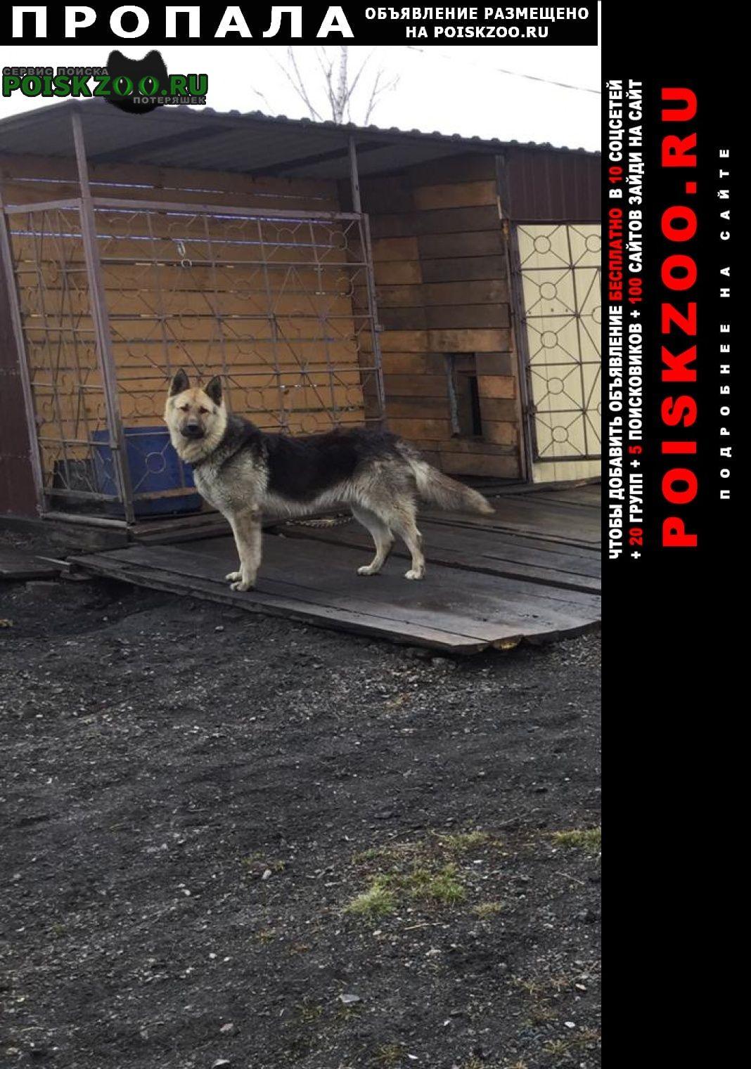 Пропала собака кобель Ленинск-Кузнецкий